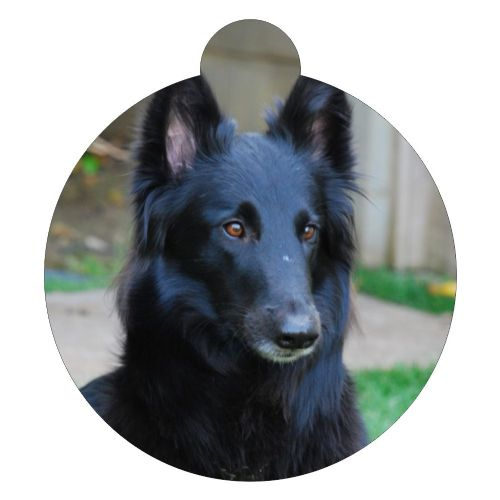 Belgian Sheepdog Picture ID tag
